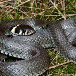 Reptiles de España